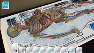 Augmented Reality | Anatomy 4D