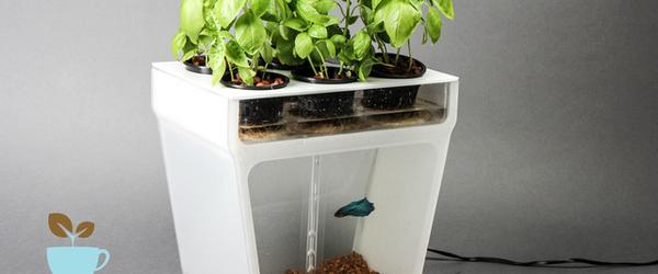 best homemade aquaponic system 2014