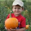 Pick a Pumpkin on Starfall