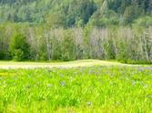 Golfing in Southeast Alaska | Valley of the Eagles Golf Links