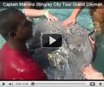 Captain Marvins | Stingray City Operator | Grand Cayman