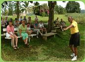 Croydon in the Mountains Plantation Tour - from Montego Bay Jamaica