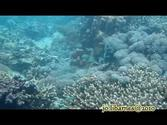 corals of jaco island,east timor