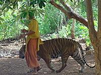 Tiger Temple - Wikipedia, the free encyclopedia