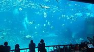 Marine Life Park - Wikipedia, the free encyclopedia