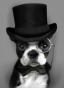 DESIGNING for Pets! | Check Out That Hat?