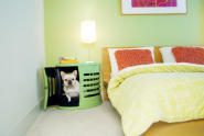 DESIGNING for Pets! | Spaces for Pets Inside Homes