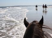 Kelly Seahorse Ranch. The only state-endorsed beach horseback riding in Florida. Now offering bike rentals for the Am...