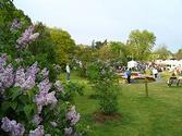Rochester Lilac Festival - Wikipedia, the free encyclopedia