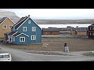 Polar Bear walking in our village (Ny-Alesund, Svalbard - 79 N)