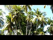 Devil's Island in French Guyana, a little paradise... -a J.C movie-