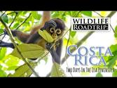 Wildlife Roadtrip: Costa Rica. Two Days in the Osa Peninsula