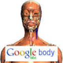 The Best Virtual Environments and Simulations | Google Body
