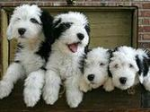 The Dogs of Pinterest | Dogs and Puppies