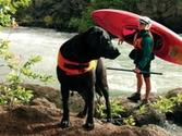 The Dogs of Pinterest | Dog Friendly Travel
