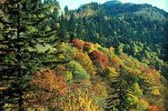 Great Smoky Mountains, North Carolina & Tennessee