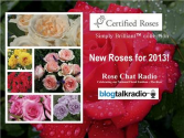 Certified Roses | Simply Brilliant™ Collection | Kordes 12/08 by Rose Chat Radio | Blog Talk Radio