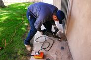 Hire Pest Control Solutions to Get Rid of Pests and Termites