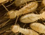 Termite Baiting and Other Termite Control Methods