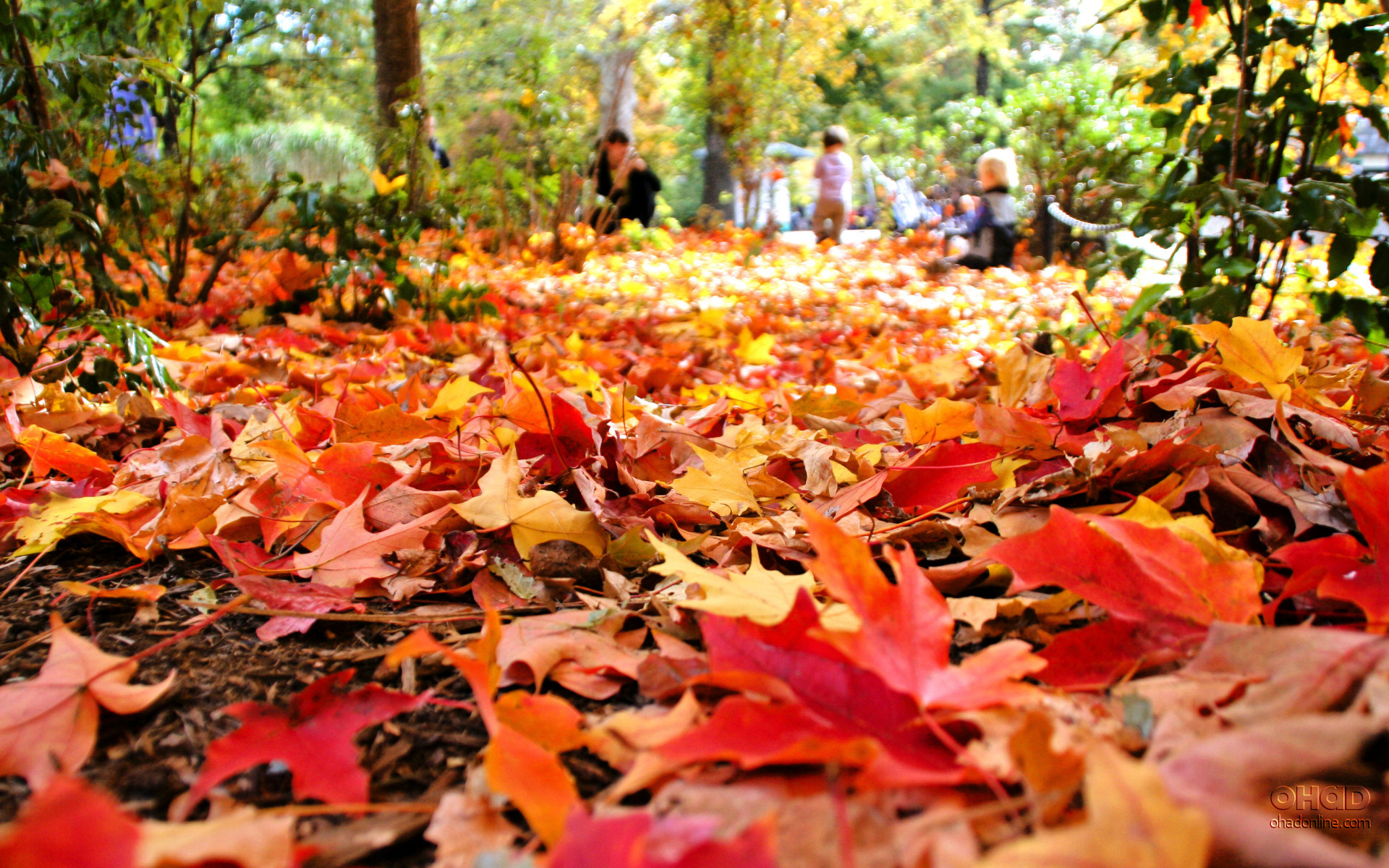 Headline for Celebrating the Season: 10 of the Best Canadian Fall Festivals
