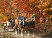 Fruit Ridge Hayrides - Horse Drawn Hayrides in the Heart of Orchard Country