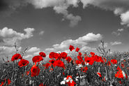 remembrance day 2014 events