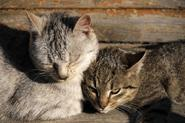 Substitutes for feliway for cats | eHow UK