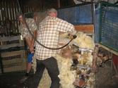 Choosing the Right Sheep Shearing Equipment