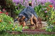 Pampered Pets Bed & Biscuit: Keep the Garden Growing