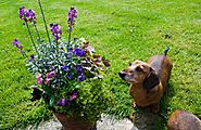 Poisonous Plants for Dogs: 51+ Toxic Plants to Watch Out | Hort Zone