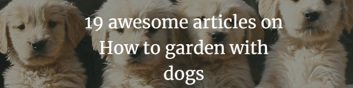 Headline for 19 awesome articles on How to garden with dogs