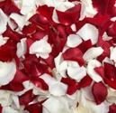 Fresh Rose Petals for Special Occasion