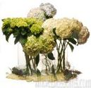 Hydrangea Bouquets and Centerpieces for Weddings