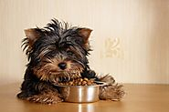 Choosing the right highest rated dog, pet and cat food