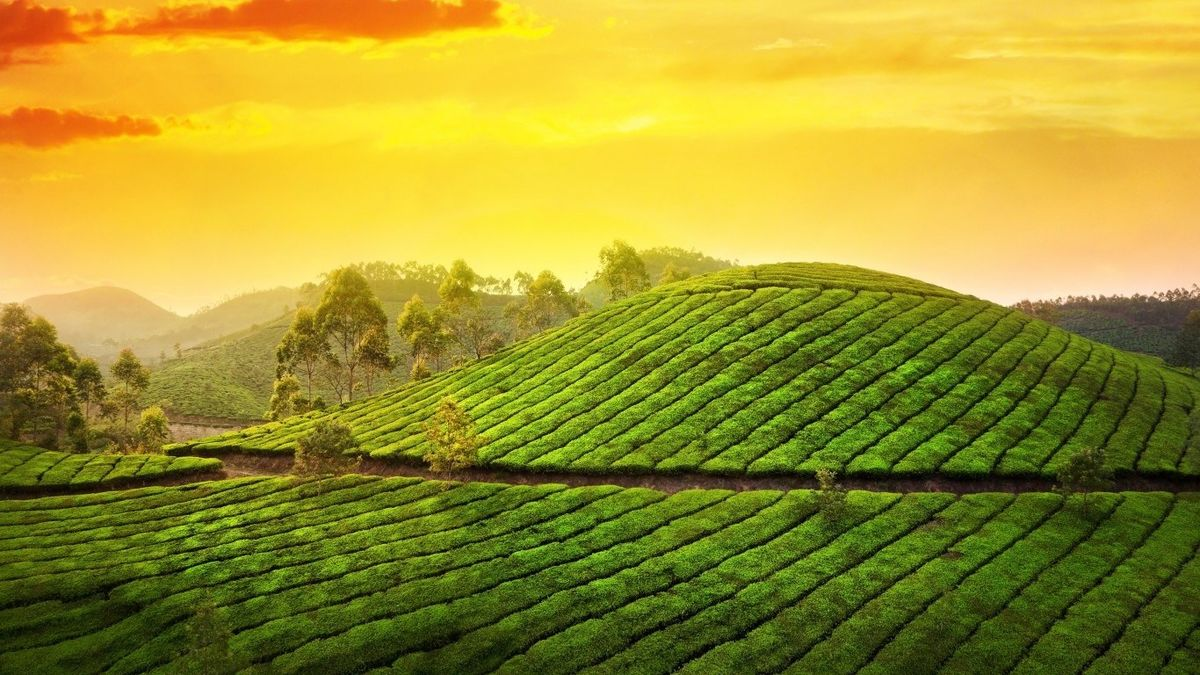 Headline for Amazing Hill Stations in Kerala