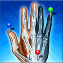 IMAIOS e-Anatomy Review | Android App | Playboard