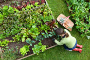 Your own vegetable organic gardening stay healthy