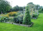 Organic vegetable gardening in NZ