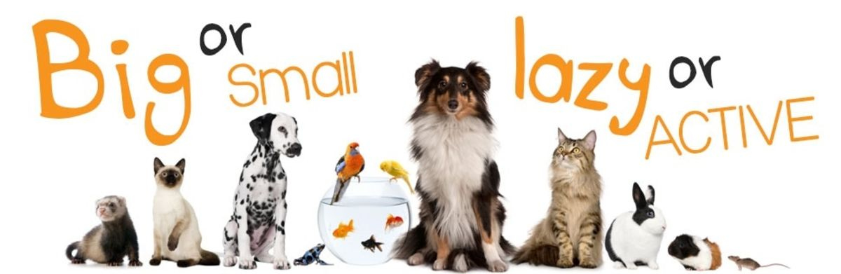 Headline for 10 Online Shops for Pet Accessories