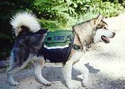 Best Backpack For Dogs Reviews (with image) · app127