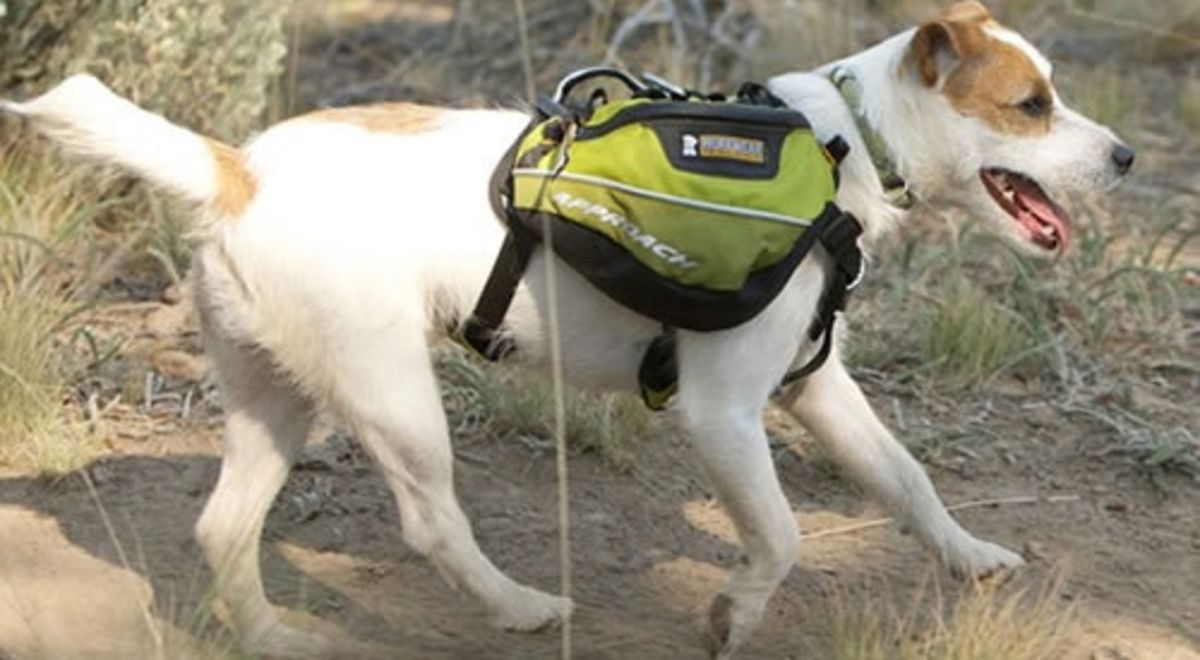 Headline for Best Backpack For Dogs Reviews