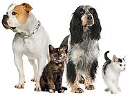 Find Dog Boarding Services for Pet Care and Delight