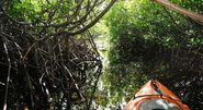 Kayak across Mangrove Forests
