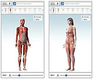 Healthline human body maps