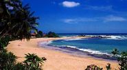 The Negombo Beaches