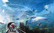 Explore Siam Ocean World