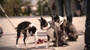 Skating Dogs visiting the Mercedes-Benz Museum - YouTube