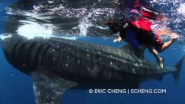 5 year old boy swims with whale shark - YouTube