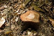 The Best Way to Rot Out a Tree Stump | eHow
