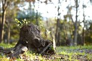 Easy and Cost-Effective Ways to Remove a Tree Stump